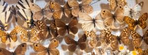 farfalle-1080x410
